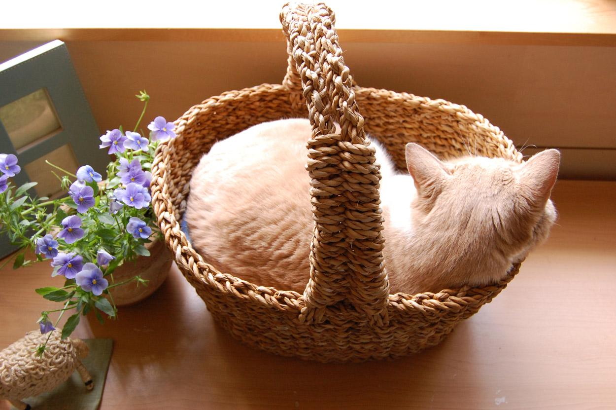 猫かごのにゃーちゃん
